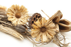 Dry flowers Royalty Free Stock Photo