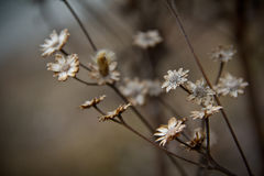 Dry flowers Royalty Free Stock Images