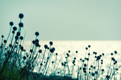 Dry flowers. Vintage style photo , abstract dry  flowers near the sea Stock Photo