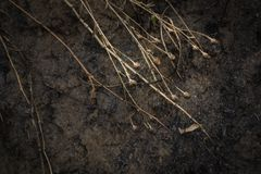 Dry flowers on the background of the scorched field.  Royalty Free Stock Images