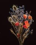 Dry flowers on black Stock Photos