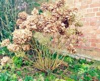 Dry flowers Royalty Free Stock Photos