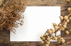 Dry flowers frame on white paper background Stock Image