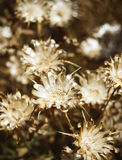 Dry flowers in the ground in warm tone Royalty Free Stock Photo