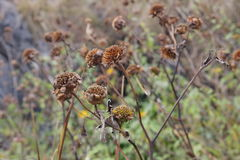 Dry flowers. Life  in winter  natural Royalty Free Stock Photos