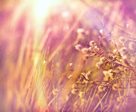 Dry flowers in meadow Stock Photo