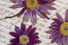 Dry flowers on old letter Royalty Free Stock Images