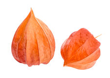 Dry flowers of Physalis Royalty Free Stock Photography