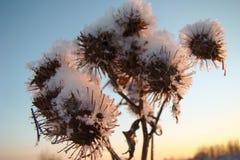 Dry flowers winter. Dry flowers mug illuminated by the setting sun winter Stock Photography