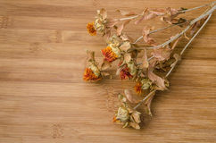 Dry Flowers Royalty Free Stock Photography