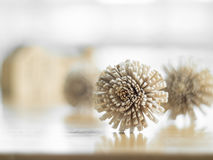 Dry flowers on the wood table. Stock Photography