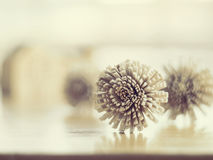 Dry flowers on the wood table. Royalty Free Stock Photography