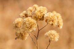 Dry Flowers Stock Photos