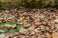 Dry foliage Stock Image