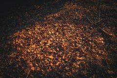 Dry foliage on the ground Stock Photo
