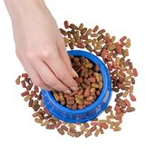 Dry food in a bowl for dogs and cats in hands. On a white background isolation, top view Royalty Free Stock Photo
