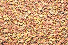 Dry food for dog, cat Royalty Free Stock Image