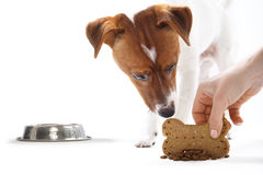 Dry food, healthy diet dog Royalty Free Stock Images