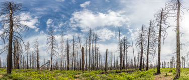 Dry forest against green grass and moss. Stock Photography