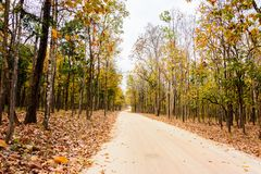 Dry forest along the road. To the park Royalty Free Stock Image