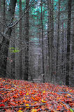 Dry forest Royalty Free Stock Image
