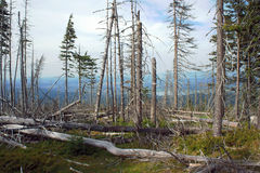 Dry forest in mountains Royalty Free Stock Photography