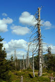 Dry forest in mountains Stock Photography