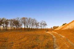 Dry Forest On The Water Meadow Royalty Free Stock Photography