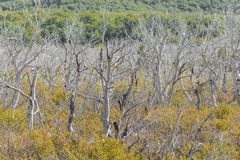Dry Forest at Patagonia Argentina Royalty Free Stock Photo