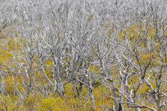 Dry Forest at Patagonia Argentina Stock Photography