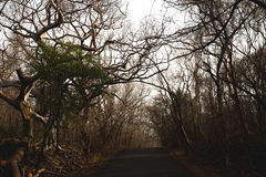 Dry Forest Road royalty free stock images