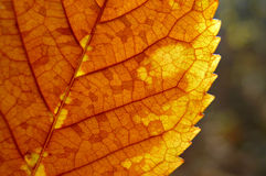 Dry fragmented leaf. Dry yellow leaf with fragmented texture Stock Photo