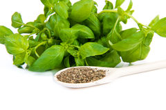 Dry and fresh basil Royalty Free Stock Images