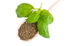 Dry and fresh basil Stock Photography