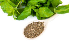 Dry and fresh basil Royalty Free Stock Image