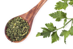 Dry and fresh parsley Stock Images
