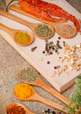 Dry and fresh spices - seasoning Royalty Free Stock Photos