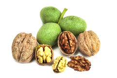 Dry and fresh walnuts isolated Royalty Free Stock Photos