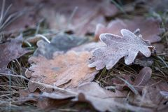 Dry and frosted leaf lying on ground. At cold winter or autumnal day. Natural background Stock Photos