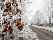 Dry frozen leaves next to the path between snow covered trees. Natural closeup with winter countryside landscape as blurred background, conceptualization of Stock Photography