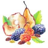 Dry fruit set royalty free illustration