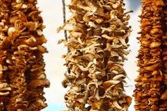 Dry fungus Stock Photos