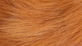 Dry Fur Texture Stock Images