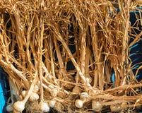 Dry Garlic Royalty Free Stock Photo