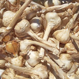 Dry garlic closeup Stock Photos
