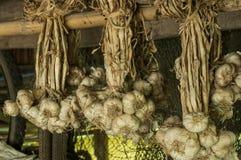 Dry garlic Stock Photos
