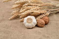 Dry garlic and unbroken nuts on a jute bag background, with bunc Royalty Free Stock Photography