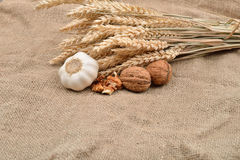 Dry garlic and unbroken nuts on a jute bag background, with bunc Royalty Free Stock Photo