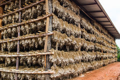 Dry garlic  in the warehouse Royalty Free Stock Photography