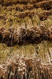 Dry garlic  in the warehouse Stock Photos